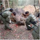 코끼리,치료,공원