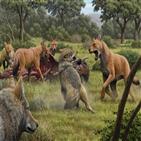 다이어,울프,늑대,분석,유전자,유전적