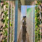 스마트팜,사업,활용,딸기,재배,스마트팜센터