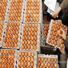 달걀,양계장,코로나19,아웃,영국,봉쇄령