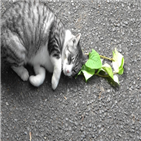 고양이,네페탈락톨,모기,연구팀,여과지,개다래나무