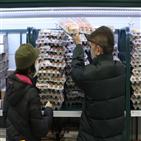 가격,지난해,올해,수요,품목,과일,상승,계란