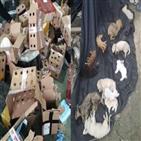 반려동물,동물,상자,중국,거북이,택배,판매