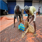 코코아,가격,코트디부아르,재고,세계,가나,초콜릿,시장