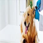 반려동물,키트,핏펫,대표,동물병원,데이터,소변검사,확인