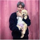 박은석,강아지,파양,동창,논란