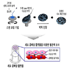 세포,플랫폼,줄기세포,공배양,개발