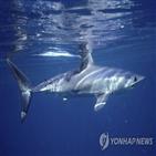 상어,개체,가오리,바다,지적,연구팀,결과,남획