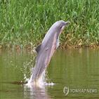돌고래,아마존강,투쿠시