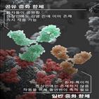 중화항체,코로나19,바이러스,감염,확인