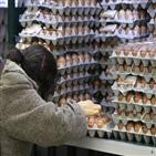 계란,수입,정부,공급,위해
