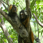 원숭이,마모셋,상호작용,소리,대화,다른