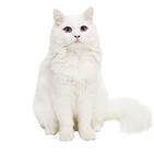 고양이,입양,사바나,성격,사람
