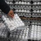달걀,가격,미국산,수입,6천,상승,지난달