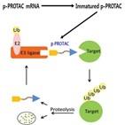 단백질,기술,세포,대한,특허,바이오이즈,질환