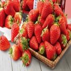 딸기,매출,이마트