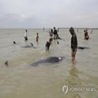 들쇠고래,해변,떼죽음,수심,뉴질랜드