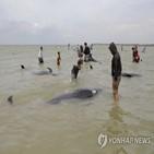 들쇠고래,해변,수심,구조팀