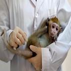 원숭이,중국,실험용,미국,백신,수출,부족