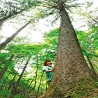 탄소중립,탄소,추진,배출량,위해,산림청,사업,대전,흡수량,일자리