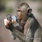 원숭이,중국,미국,실험용,코로나19,부족,수출