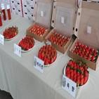 딸기,말레이시아,시장,신품종