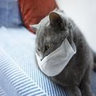 검사,고양이