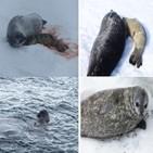 물범,남극,새끼,연구팀,주변