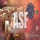 아프리카돼지열병,코로나19,바이러스