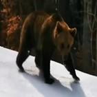 스키장,불곰,추격전,스토