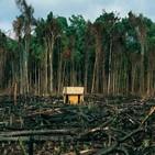 브라질,가입,대통령,아마존,열대우림,보호