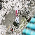 의료진,벚꽃,코로나19,우한대,중국