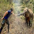 코끼리,태국,수의사,플라이