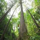 산림일자리,공공일자리,산림,탄소중립,활성화,나무,산림청,방안
