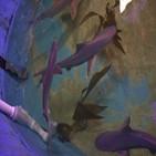 상어,보호종,마리,뉴욕주