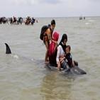 들쇠고래,해변,수심,떼죽음