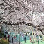 벚꽃,예정,시민,방역,지자체,부산시