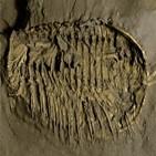 아가미,윗부분,삼엽충,다리,분지,구조
