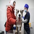 동물,인간,코로나19,백신,바이러스