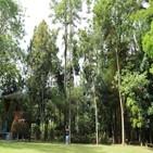 나무,인도네시아,한국,산림,생태교육숲,인니,자티,면적,이상,활용