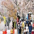 벚꽃,마스크,시민,우려,서울,명소