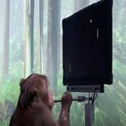 원숭이,게임,조이스틱,실험