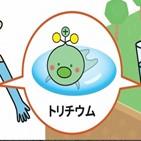 트리튬,일본,캐릭터,방류,오염수,정부,물질,방사성