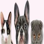 반려동물,미국,보험,산업,종목,지난해,관련