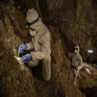 고대,동굴,조각,게놈,토양,연구,분석