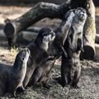 수달,코로나19,미국,동물원