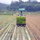 지원,파견근로자,농가,농업,분야