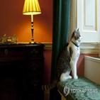대통령,고양이,바이든,백악관,집사,메이저