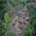 브라질,열대우림,아마존,지난달,파괴,대통령
