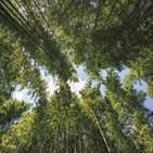 숲길,대나무,천은사,아이,자동차,강화,구례,명소,다양,코스